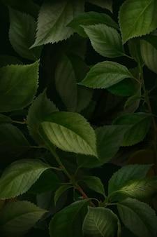 Briançon wektor wzór liścia moreli