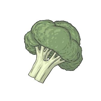 Brokuły ilustracja zdrowej żywności ręcznie rysowane styl