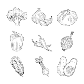 Brokuły papryka czosnek cebula marchew buraki warzywa świeża organiczna natura, ręcznie rysowane styl