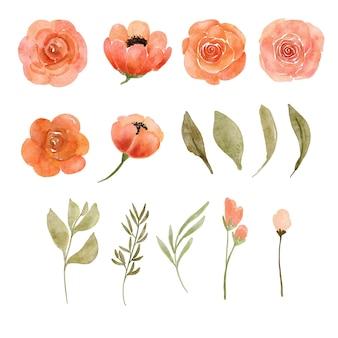 Brzoskwiniowy luźny kwiat akwarela ilustracja
