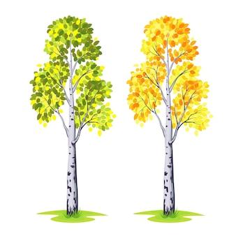 Brzoza drzewa na białym tle. ilustracja.