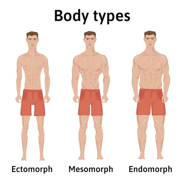 Budowa ciała ludzkiego. typy ciała mężczyzny. endomorf, ektomorf i mezomorf. wysportowani młodzi mężczyźni w krótkich spodenkach.