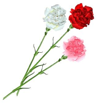 Bukiet białych, różowych i czerwonych goździków