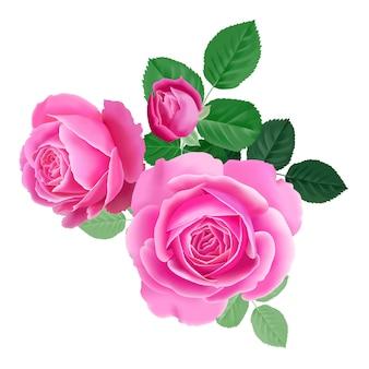 Bukiet różowej róży.