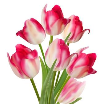 Bukiet tulipanów na białym tle.