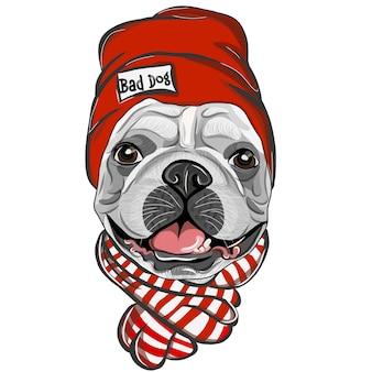Buldog francuski w czerwonej czapce i szaliku. kolor, wektor rysunek portret szczeniaka buldog francuski.