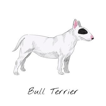 Bull Terrier Darmowych Wektorów