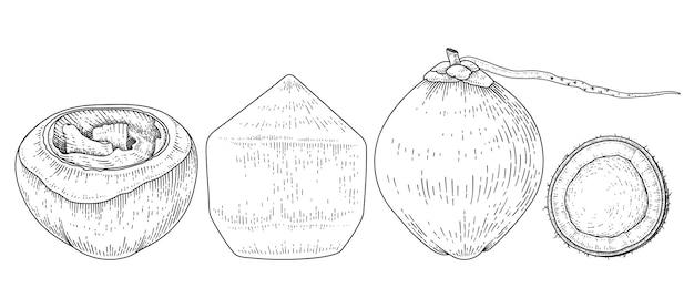 Cała i połowa kokosowego ręcznie rysowanego szkicu w stylu retro