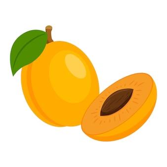 Cała morela z gałązką i liściem i przekrojona na pół z nasionami. owoc