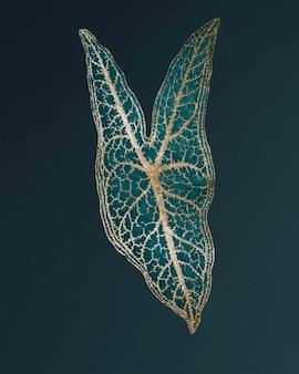 Caladium belleymel, grawerowany vintage liść serca jezusa, remiks oryginalnej grafiki benjamina fawcetta.