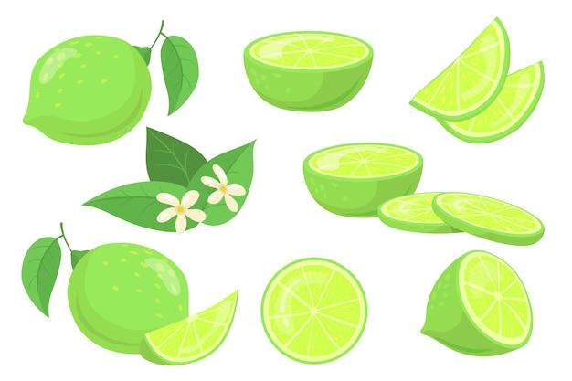 Całe i pokrojone limonki z zestawem ilustracji liści