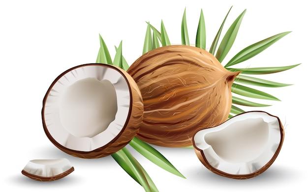 Całe i popękane orzechy kokosowe z liśćmi monstery. realistyczny.