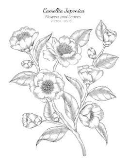 Camellia japonica kwiat i liść rysunek ilustracja z grafiką liniową na białym tle