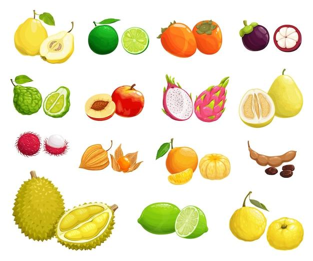 Cartoon owoce pigwa, brzoskwinia i gruszka, koper włoski, durian, mangostan i limonka z persimmon