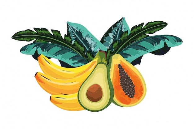 Cartoon owoców tropikalnych