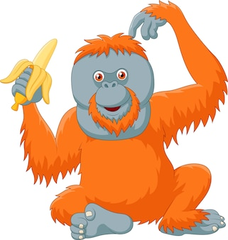 Cartoon śmieszne orangutan jedzenie banana