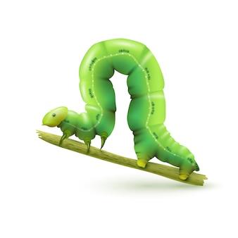 Caterpillar realistyczny na białym tle