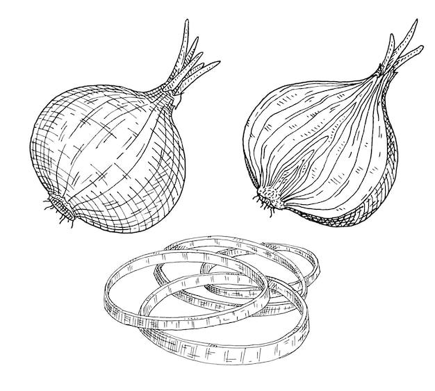 Cebulę w całości, na pół i pokroić w plastry. vintage wektor wylęgowych czarny ilustracja. na białym tle. ręcznie rysowane projekt