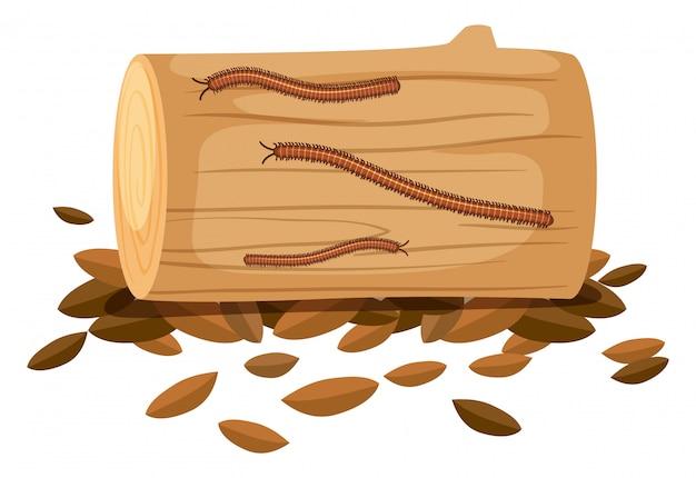 Centipede na drewnie na białym tle