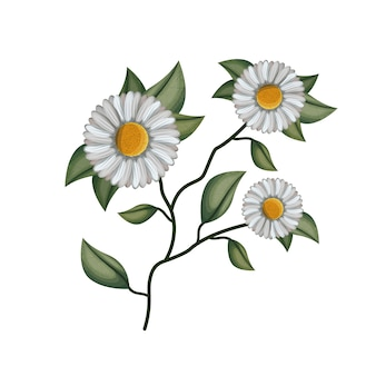 Chamomile kwiatu roślina w białym tle