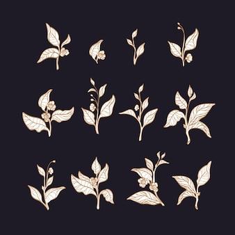Charakter zestaw sylwetki krzewów herbacianych oddziałów z liści, kwiatów. kolekcja kwiatowa kwitnienie wiosny