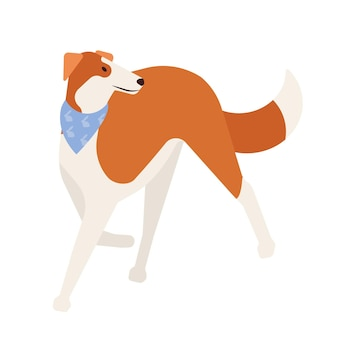 Charty lub gazehound. śliczny ładny pies myśliwski z krótkim włosianym płaszczem na białym tle. wspaniałe rasowe zwierzę domowe lub zwierzę domowe noszące szalik. ilustracja wektorowa kreskówka płaski.
