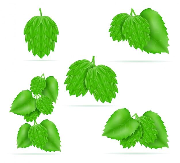 Chmiel dojrzały i zielony składnik do przygotowania piwa