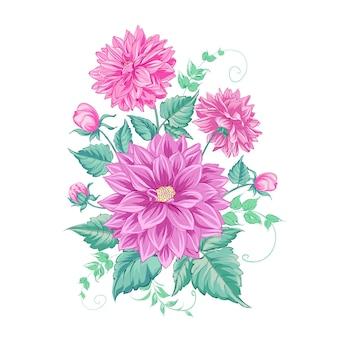 Chryzantema kwiat na białym tle nad białym.