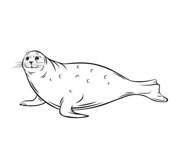 Cielę morską. ikona konspektu zwierząt foki. polarny płetwonogich ssak, ilustracja.