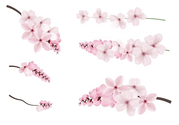 Ciemne i jasne różowe kwiaty sakury.