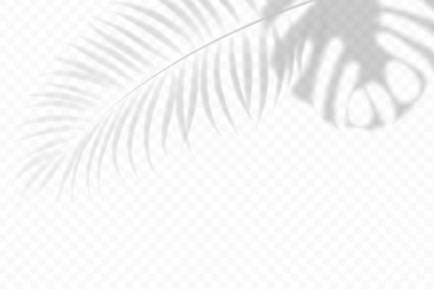 Cień tropikalny liści na białym tle