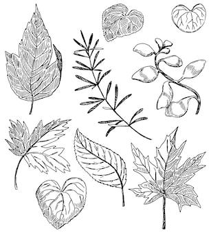 Cliparty z liści konspektu. szkice czarnym tuszem liści, gałęzi, roślin na białym tle. ręcznie rysowane wektor zestaw ilustracji. botaniczne elementy vintage do projektowania, wystroju.