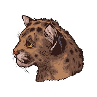 Cougar baby, portret na białym tle szkicu egzotycznych zwierząt. ręcznie rysowane ilustracji.