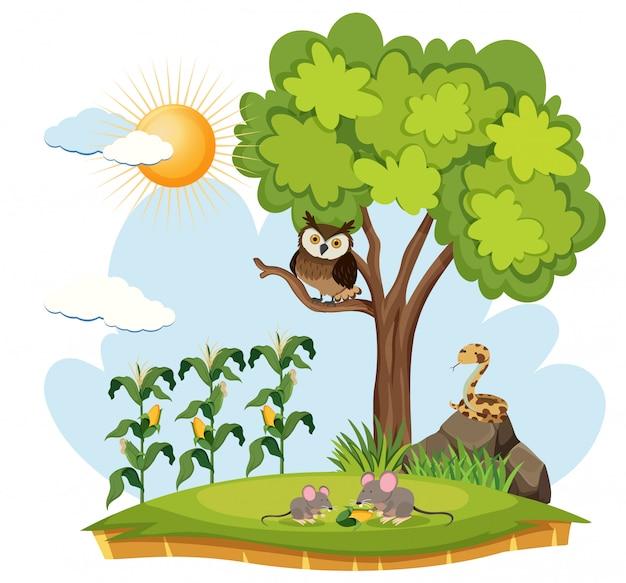 Crop farm and wild animals