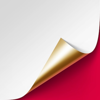 Curled złoty róg białej księgi z cieniem zamknij się na białym tle na czerwonym tle