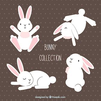 Cute easter królik w różnych pozycjach