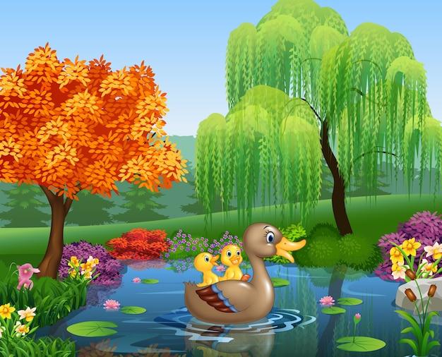 Cute kaczka pływanie po stawie
