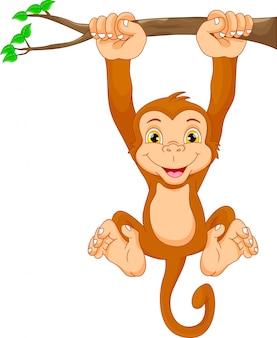 Cute małpa kreskówki