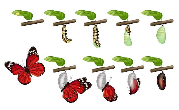 Cykl motyla. życie owadów larwa kokon larwy poczwarki gąsienice zmieniają koncepcję. ilustracja motyl i gąsienica, mucha owadów