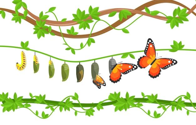 Cykl życia motyla kolorowy płaski ilustracja. gąsienica, metamorfoza motyla kokonu