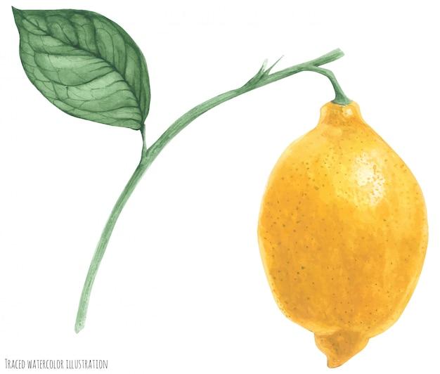 Cytryna gałąź