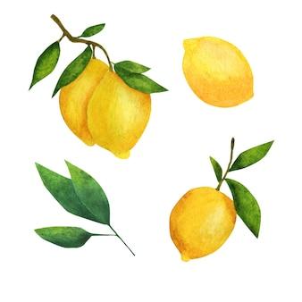 Cytrynowy. akwarela zestaw świeżych cytryn.