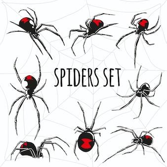 Czarna wdowa pająk wektor zestaw