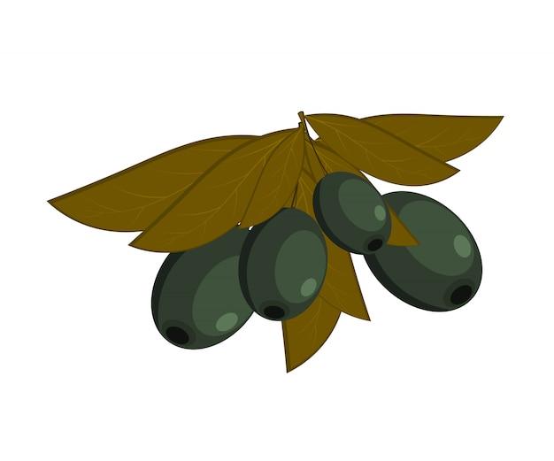 Czarne oliwki z liśćmi na białym tle