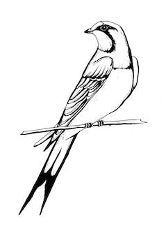 Czarno-biały rysunek jaskółczego ptaka