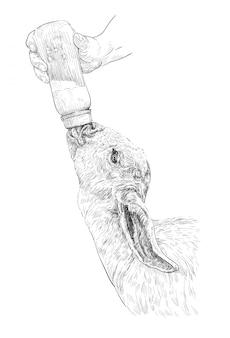Czarno-biały rysunek ludzkiej ręki karmienia kozy dziecka mlekiem z butelki
