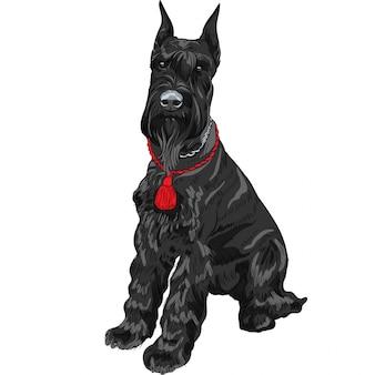 Czarny giant sznaucer siedzący pies