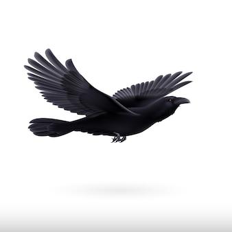 Czarny kruk