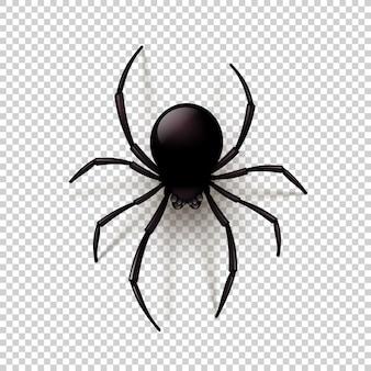 Czarny pająk z przezroczystym cieniem na tle w kratkę. można umieścić na dowolnym tle. ilustracja,