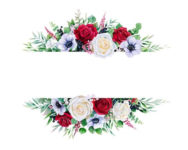 Czerwona i biała róża, obramowanie ramki na białym tle.